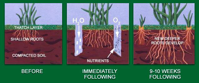 Core aeration is the most beneficial service you can do for your lawn. Aeration involves perforating the soil with small holes to allow air, water, & nutrients to penetrate the grass roots.